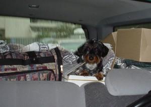Dagny in Car